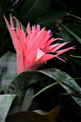 Pink Pineapple Express  | Canon Forums